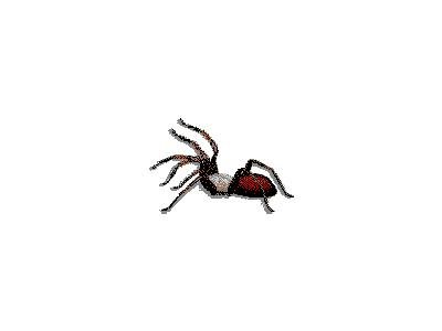 Logo Animals Spiders 002 Animated