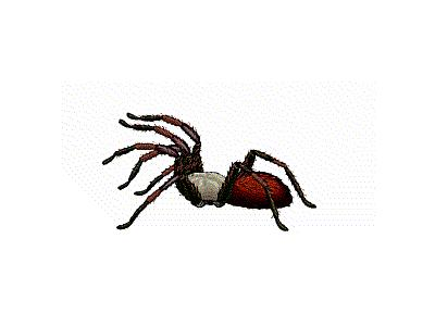 Logo Animals Spiders 014 Animated