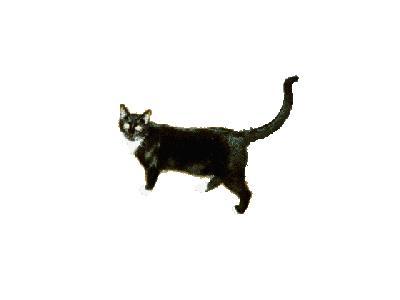 Logo Animals Cats 044 Animated