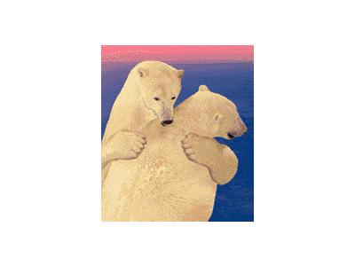 Logo Animals Bears 020 Color