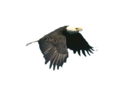 Logo Animals Birds 005 Color