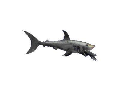 Logo Animals Fish 060 Color