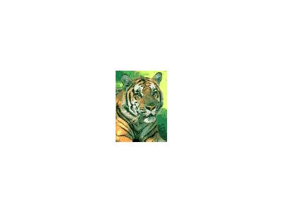 Logo Animals Jungle 050 Color