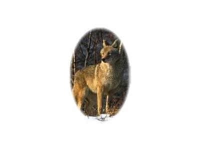 Logo Animals Wolves 003 Color