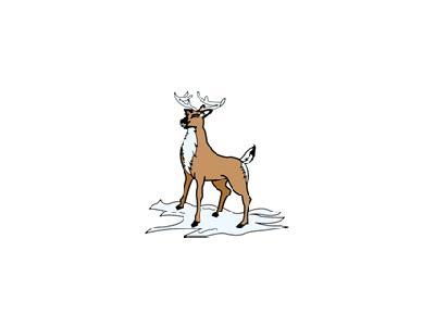 Greetings Reindeer05 Color Christmas
