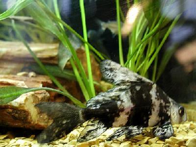Photo Aquarium Fish 26 Animal
