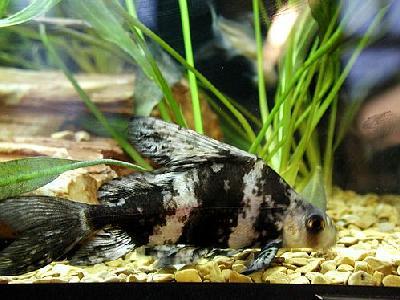 Photo Aquarium Fish 28 Animal