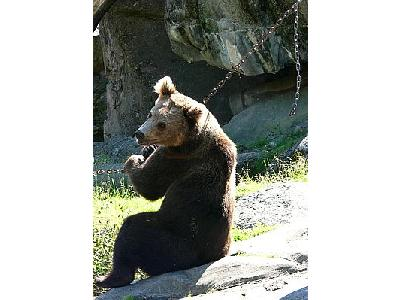Photo Bear Sitting On The Behind Animal