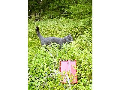 Photo Cat Gathering Blueberries Animal