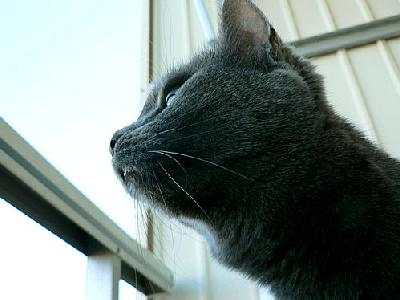 Photo Cat Looking Out 2 Animal