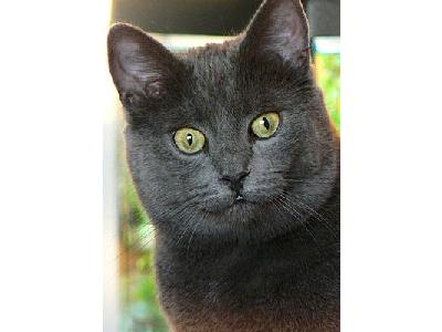 Photo Cat With Staring Eyes Animal