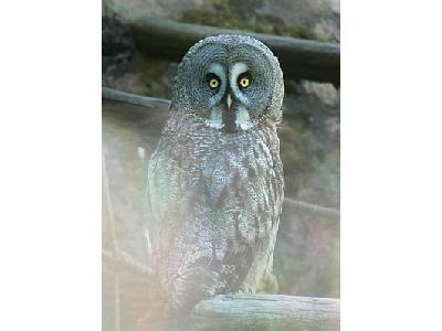 Photo Owl Animal