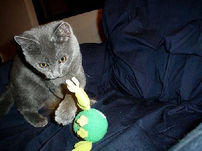 Photo Playing Cat Animal