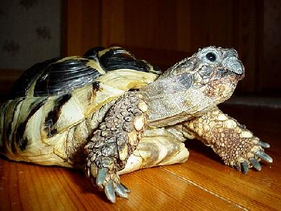 Photo Turtle Animal