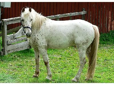 Photo White Horse Animal