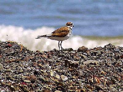 Photo Bird 10 Animal