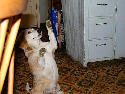 Photo Dog Animal