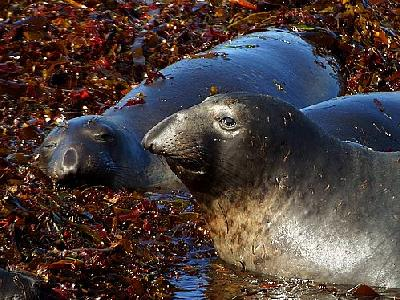 Photo Elephant Seals Animal