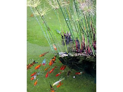 Photo Fishes In Pond Animal