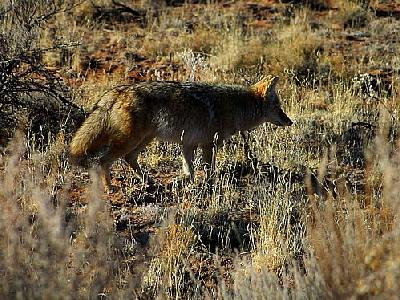 Photo Fox Animal