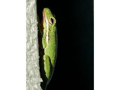 Photo Frog Animal