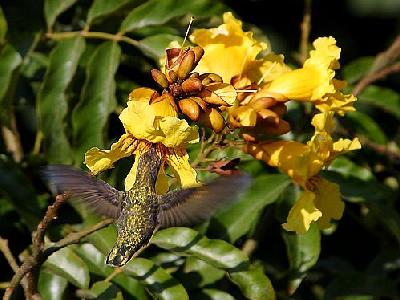 Photo Hummingbird 2 Animal