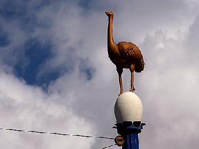 Photo Ostrich Animal