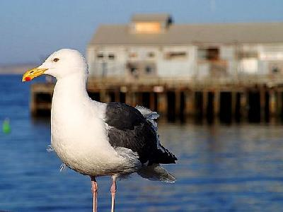 Photo Seagull Animal