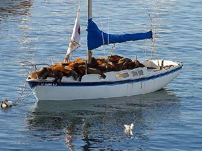 Photo Seal Boat Animal