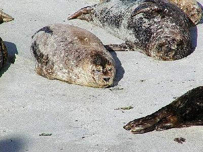 Photo Seals 4 Animal