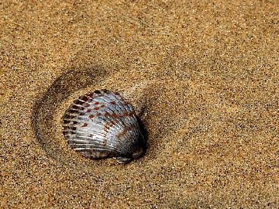 Photo Shells And Sand Animal