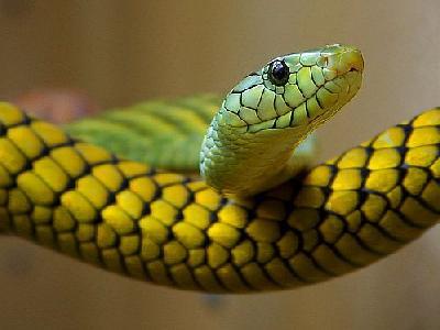 Photo Snake Animal