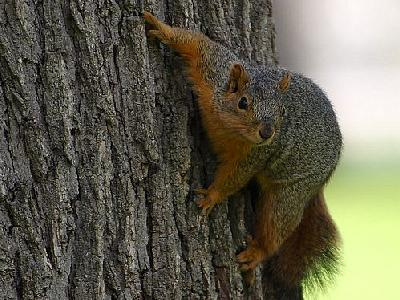 Photo Squirrel Animal
