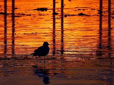 Photo Sunset Bird Animal