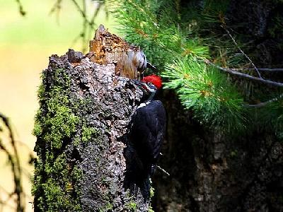 Photo Woodpecker 2 Animal