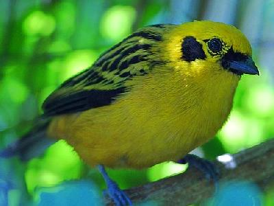 Photo Yellow Bird Animal