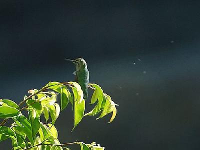 Photo Bird 4 Animal