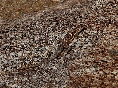 Photo Camouflaged Lizard Animal