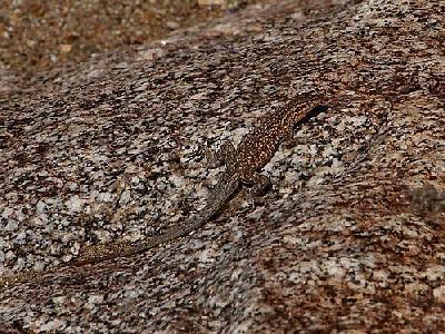 Photo Camouflaged Lizard Animal