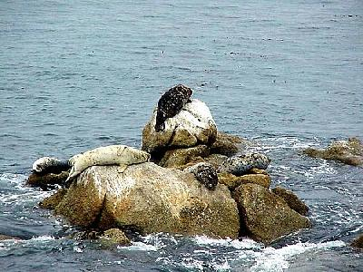 Photo Seals 2 Animal