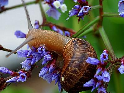 Photo Snail Animal