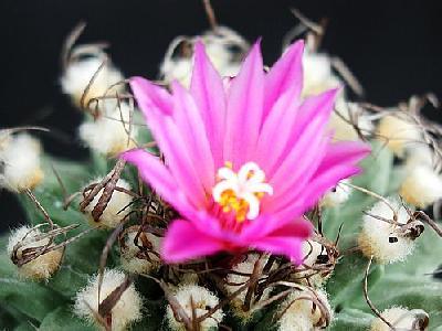 Photo Cactus 134 Flower