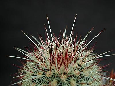 Photo Cactus 200 Flower
