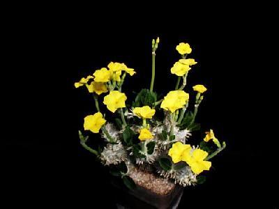 Photo Cactus 206 Flower