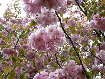 Photo Flowering Tree Flower