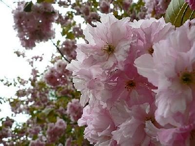 Photo Flowering Tree 3 Flower