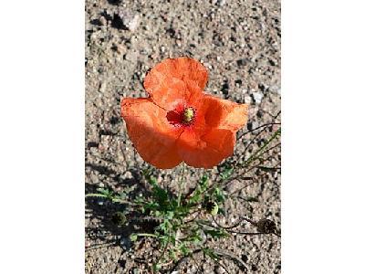 Photo Orange Flower 2 Flower