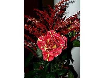Photo Red Bouquet Flower