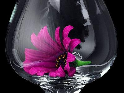 Photo Daisy Glass Flower