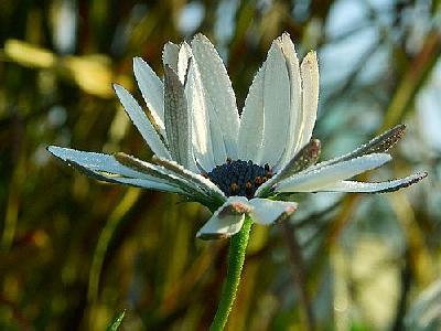Photo Dew 2 Flower